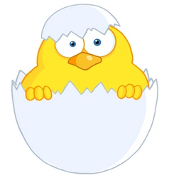 Yellow easter chick in a shell vector