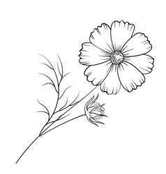 Buttercup flower isolated vector