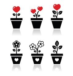 Heart in flower pot icons set vector