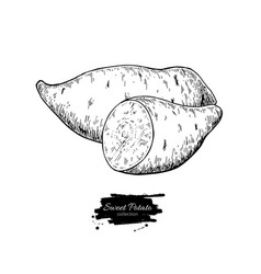 sweet potato hand drawn vector image