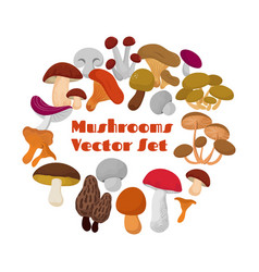 Delicacies fresh edible mushrooms set vector