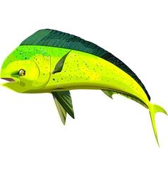 Dorado1 vector