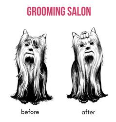 Beauty dog salon template vector