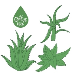 Collection of hand drawing aloe vector