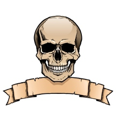 Colored human skull with ribbon banner vector image