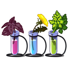 plants in chemical tubes with different liquid vector image vector image