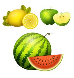 ripe striped watermelon realistic juicy apple vector image vector image