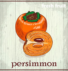 Hand drawing of persimmon fresh fruit sketch vector