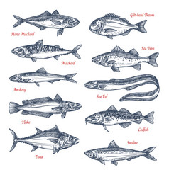 Sketch icons of sea and ocean fish vector