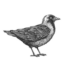 hand-drawn bird animal sketch vector image