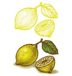 lemon retro vector image