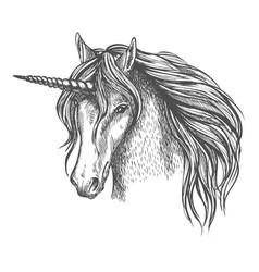 Unicorn mythic horse with horn sketch vector
