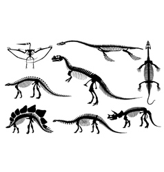 Dinosaurs and fossils skeleton vector