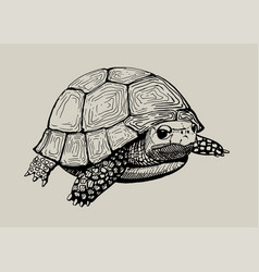 Isolated hand drawn tortoise vector