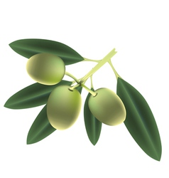 Olives isolated vector image vector image