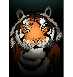 Tiger watching in the dark vector