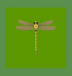 flat shading style insect dragonfly vector image