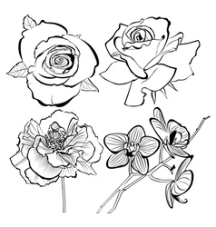 poppy rose orchid flowers collection vector image