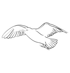 Ink sketch seagull in flight vector