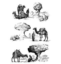 desert landscape with arab and camel next to vector image