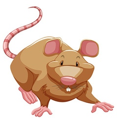 Playful rat vector
