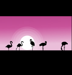collection stock of flamingo at sunset scene vector image vector image