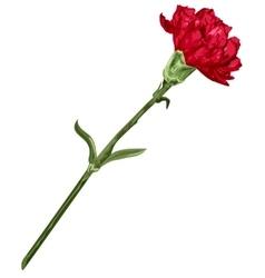 Red carnation flower vector