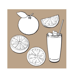 Whole half quarter grapefruit and glass of juice vector