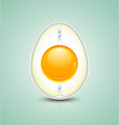 Egg cross section icon vector