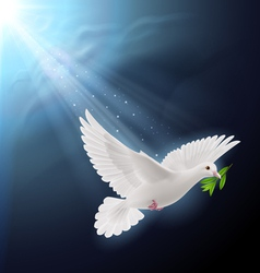Fly dove in sunlight vector