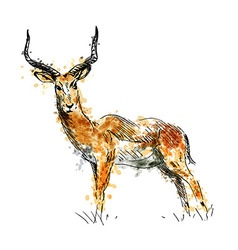 Colored hand drawing antelope vector