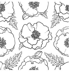 Hand drawn poppy seamless pattern vector