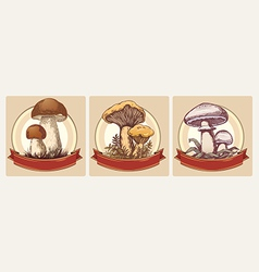 Edible mushrooms vector