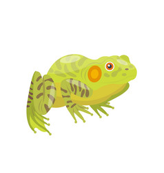 frog cartoon tropical green animal cartoon nature vector image