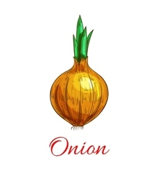 Onion vegetable with green leaf sketch vector