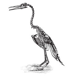 Restoration of hesperornis regalis vintage vector