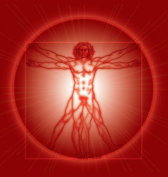 The Vitruvian Man vector image vector image