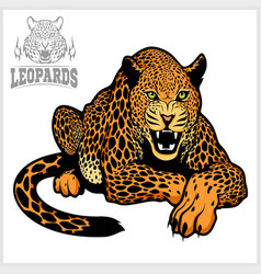 leopard - isolated on white vector image vector image