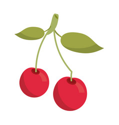 cherry berry nutrition icon vector image vector image