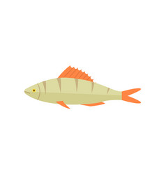 Zander river fish isolated icon vector