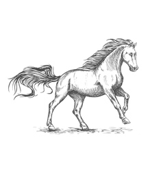 Running galloping white horse sketch portrait vector