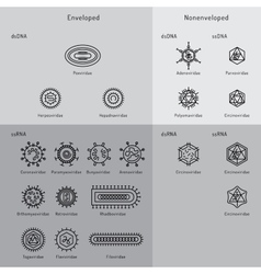 Cells of viruses and bacteria vector