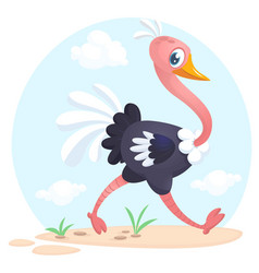 322ostrich vector image