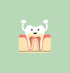 healthy tooth anatomy is fun vector image vector image