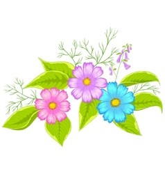 Flower cosmos vector