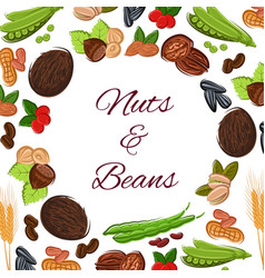 Round poster of nuts grain and seeds vector