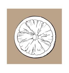 Top view round slice half of ripe grapefruit vector