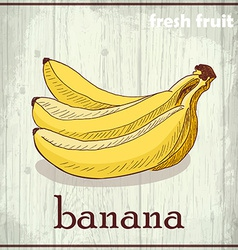 Hand drawing of banana fresh fruit sketch vector
