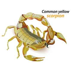 Common yellow scorpion vector