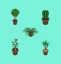 Isometric houseplant set of plant peyote vector